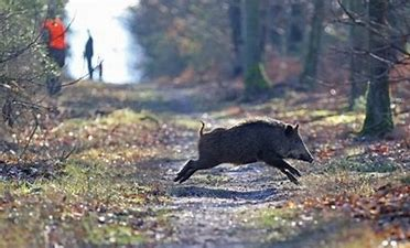 La chasse en forêt communale