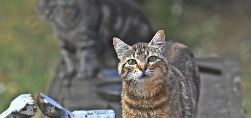 Campagne de ramassage des chats errants