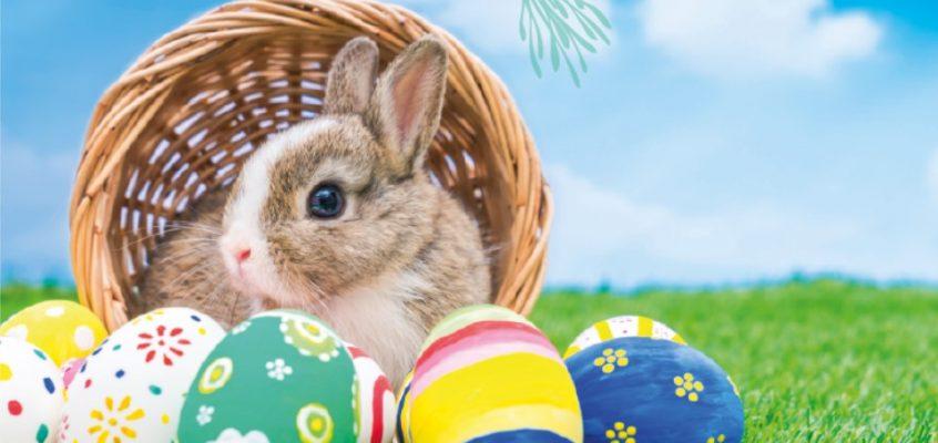 Annulation chasse aux œufs !
