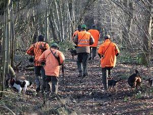 Ouverture de la chasse en foret communale